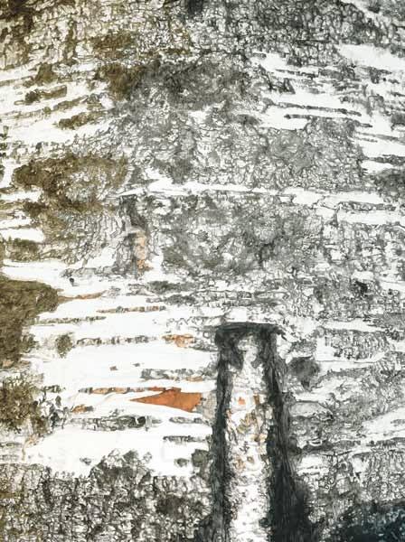 Tree-Finland-A_03