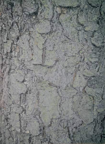 "TREE, Iceland, ©2006 acrylic on panel 24"" x 18"" Collection Reykjavik Art Museum"