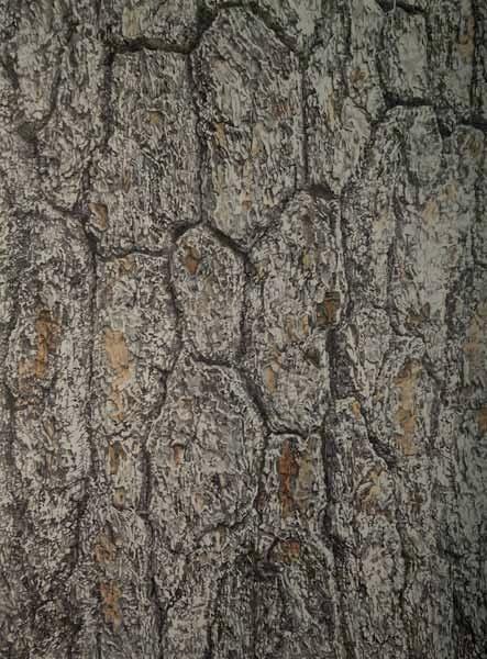 "TREE, North America, ©2006 acrylic on panel 24"" x 18"""