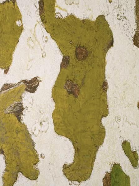 """TREE, Rhode Island, ©2008 acrylic on panel 24"""" x 18"""""""