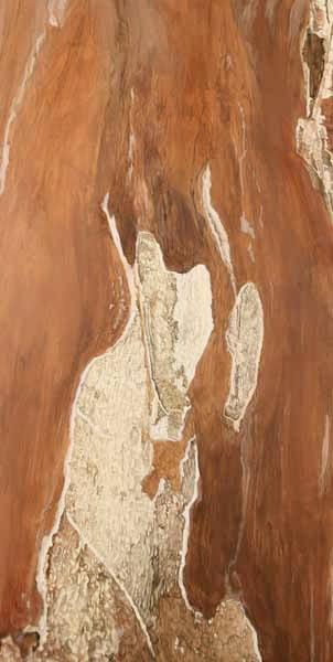 """TREE, Wave Hill, NY (a), ©2008 acrylic on panel 24"""" x 14"""""""